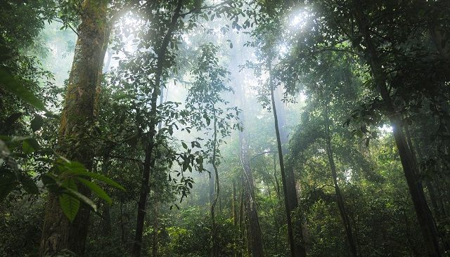 Brazil Nuts and the Amazon Rainforest: A Story of Sustainability, Livelihood, and Conservation