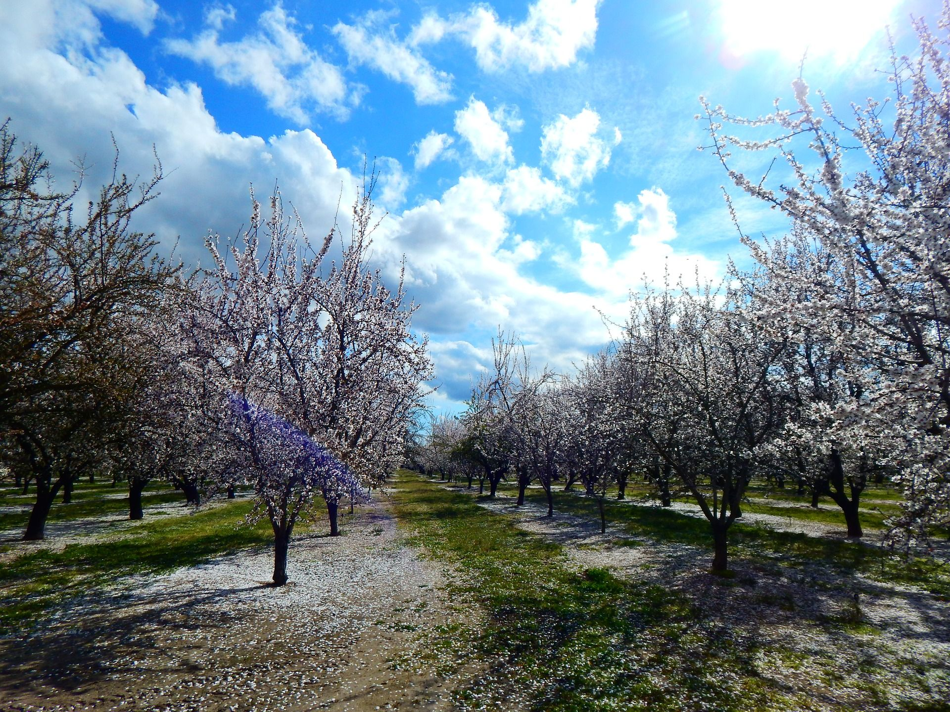 Promising Nut and Dried Fruit Production Worldwide for 2017/18